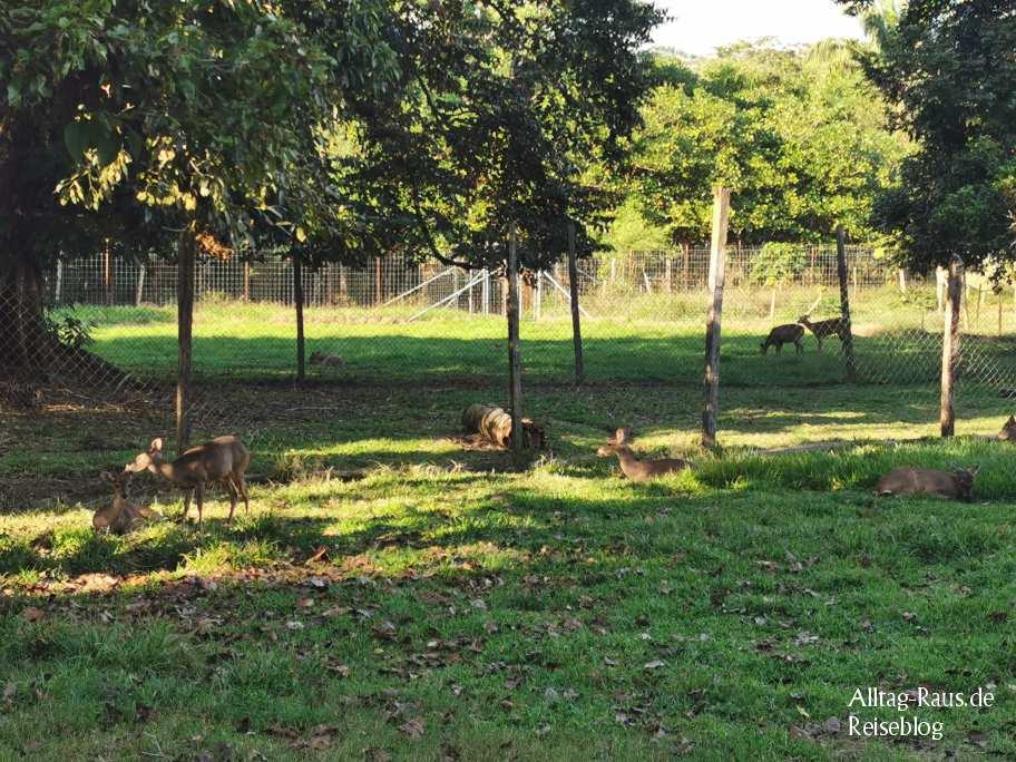 Ecolodge Las Guacamayas